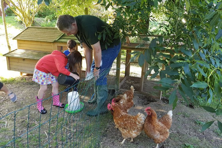 Collecting eggs from the chickens