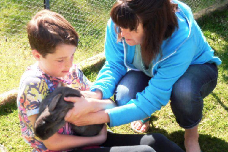 Pets corner - rabbits & guinea pigs