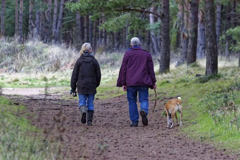 Dog friendly walking holidays